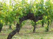 Wein 6